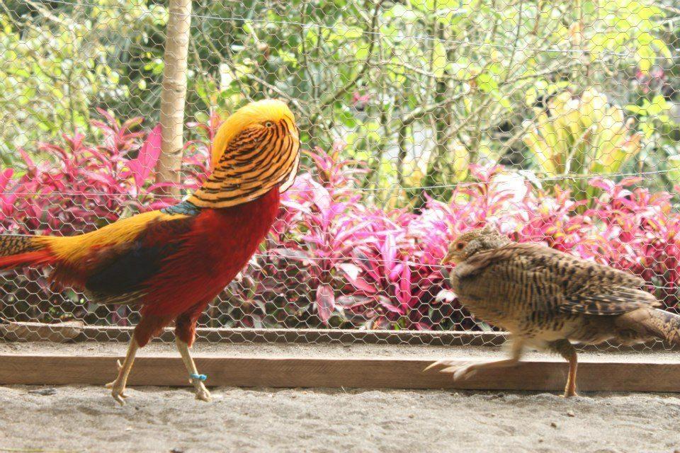 Observar Aves Exóticas