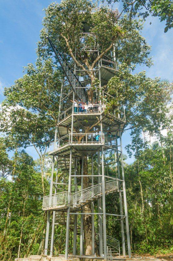 La casa del arbol pastaza travel for Casa del arbol cuenca