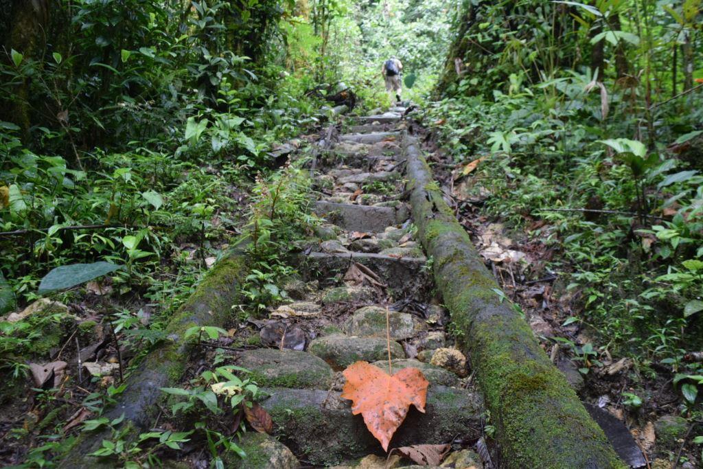 Ruta Geobotánica